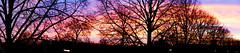 Panorama - Sunrise 29-12-2019 (PAUL (Van de Velde) -Fotografie) Tags: nederland netherlands nikon paulfotografie padagudaloma paulvandevelde natuurfotografie nature naturephotographer landscape landschapsfotografie landschap landscapephotography sunlight sunrise sky trees backlight tegenlicht ochtendgloren paulvandeveldefotografie colorful autumn outdoor natural sunny bright