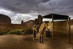 Horse near John Ford Point - Monument Valley - Arizona - USA (R.Smrekar) Tags: usa 2019 arizona animal nikon z7 smrekar 000500