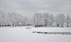 26/1 2019. (johnerlandaxelsson@gmail.com) Tags: gimo uppland sverige vinter natur landskap landscape johnaxelsson