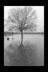 Reflections 16 (mini-b) Tags: tonbridge floods christmas 2019 blackwhite monochrome reflections racecoursesportsground sportsground luminar2018 aurorahdr2018 canon eos5dmkiv ef24105mm14lisusm ef1635mm128liiusm