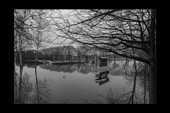 Reflections 14 (mini-b) Tags: tonbridge floods christmas 2019 blackwhite monochrome reflections racecoursesportsground sportsground luminar2018 aurorahdr2018 canon eos5dmkiv ef24105mm14lisusm ef1635mm128liiusm