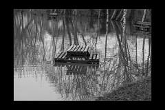 Reflections 10 (mini-b) Tags: tonbridge floods christmas 2019 blackwhite monochrome reflections racecoursesportsground sportsground luminar2018 aurorahdr2018 canon eos5dmkiv ef24105mm14lisusm ef1635mm128liiusm