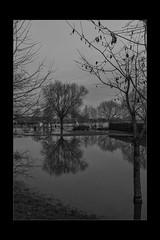 Reflections 08 (mini-b) Tags: tonbridge floods christmas 2019 blackwhite monochrome reflections racecoursesportsground sportsground luminar2018 aurorahdr2018 canon eos5dmkiv ef24105mm14lisusm ef1635mm128liiusm