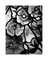 Manuel Felip House IV (BLANCA GOMEZ) Tags: spain barcelona bcn bw blackwhite light shadows textures patterns arquitectura architecture arquitectos telmofernándezijanot manulefeliphouse casamanuelfelip modernism modernismo door glass floraldesign flowers plants leaves