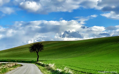 andando in giro per le campagne pugliesi - in EXPLORE (albygent Alberto Gentile) Tags: foggia foggiaedintorni green verde nuvole clouds albero puglia paesaggio landscape