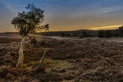 Lüneburger Heide ...morgens Sonnenaufgang minus 4 Grad (Fritz Zachow) Tags: lüneburger heide natur naturschutzgebiet deutschland niedersachsen