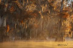 Bayou Autumn_27A1722 (Alfred J. Lockwood Photography) Tags: morning flora atchafalayabasin spanishmoss cypresstree cajuncountry iberiaparish autumn lake fall landscape nature alfredjlockwood