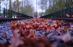 Nature's red carpet (Michael Kalognomos) Tags: photography sony sony35mmf18oss sonya6400 rail tracks train redleaves amsterdam netherlands holland christmas bokeh dof depthoffield colors landscape