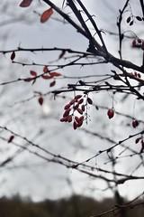 Winter fruits (Radu Andrei B) Tags: