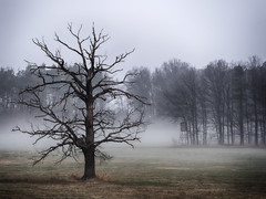 The old warrior - Der alte Krieger (ralfkai41) Tags: woodland ngc autumn nebel herbst nature mist outdoor wald natur baum tree forest fog landscape dawn feld morgendämmerung moody landschaft field