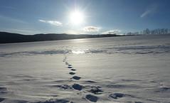 Spuren im Schnee (Mariandl48) Tags: spurenimschnee winterlandschaft smmersgut wenigzell steiermark austria