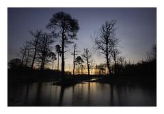 Rising (Theo Bauhuis) Tags: wooldseveen zonsopgang ochtend ochtendrood reflectie spiegeling sunrise pines pine pinetree trees bomen dennebomen peat moor natuurmonumenten bluehour achterhoek natura2000 ice ijs reflection