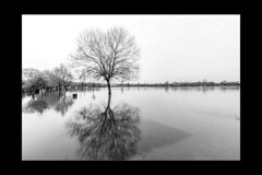 Reflections 17 (mini-b) Tags: tonbridge floods christmas 2019 blackwhite monochrome reflections racecoursesportsground sportsground luminar2018 aurorahdr2018 canon eos5dmkiv ef24105mm14lisusm ef1635mm128liiusm