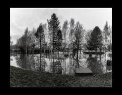 Reflections 01-Pano (mini-b) Tags: tonbridge floods christmas 2019 blackwhite monochrome reflections racecoursesportsground sportsground luminar2018 aurorahdr2018 canon eos5dmkiv ef24105mm14lisusm ef1635mm128liiusm
