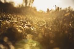 December light (fredrikamarias) Tags: nature bokeh bokehlicious dof finland seasons december winter