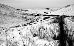 Ger Eisteddfa Gurig, ochr Maldwyn (Rhisiart Hincks) Tags: wales cymru landscape tirlun snow erch sneacht eira powys maldwyn montgomeryshire ue eu ewrop europe eòrpa europa aneoraip a'chuimrigh kembra kembre gales galles anbhreatainbheag 威爾斯 威尔士 blancinegre duagwyn gwennhadu dubhagusgeal dubhagusbán blackandwhite bw zuribeltz blancetnoir blackwhite monochrome unlliw blancoynegro zwartwit sortoghvid μαύροκαιάσπρο feketeésfehér juodairbalta