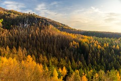 Peak fall colors (derliebewolf) Tags: indiansummer goldenfall fallcolors fall fallcolours falllight colors colour unspoilednature natur nature landscape landscapes landschaft nationalpark saxonswitzerland saxon switzerland sächsicheschweiz elbsandsteingebirge tree colorfultrees trees mountain mountains hiking sunset goldenhours goldenhour