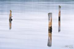 3 poles. (PvRFotografie) Tags: nederland holland zeeland grevelingen water paal pole poles palen hout wood sonyilca99m2 sony70200mmf28g sonysal20tc