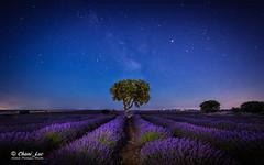 En hora azul... (Chani_Luc) Tags: víaláctea 2019 lavanda brihuega