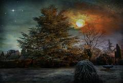 bonne fin de 2019.... (.Sophie C.) Tags: leshautsdefrance jardin nuit étoile pse15 photoshopelements15 lenabem texture