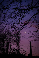 29th December 2019 (Rob Sutherland) Tags: crescent moon waxing cumbria cumbrian sparkbridge uk lakes lakeland lakedistrict fence night post purple sky evening dark tree hedge england english britain british nightsky
