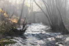 Hiking in Wallonie in a fairytale landscape (Claudio Nichele (@jihan65 on Twitter)) Tags: nature gel woods hiver winter bois frost fog brouillard river rivière wallonie belgique