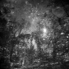 Vernal Pool #9 (LowerDarnley) Tags: holga doubleexposure vernalpool woods reflection trees leaves sun water localwoods whiphill stoneham ma