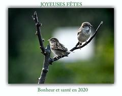 Bonne et heureuse année (caffin.jacques3) Tags: carte de vœux wish card oiseaux branche 2020 birds branch bonheur et santé en happiness health joyeuses fêtes happy holidays