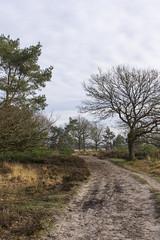 Kampina, 29 december 2019 winterwandeling (21) (peerkescheffers67) Tags: kampina hei heide vennen bos natuurmonumenten