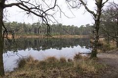 Kampina, 29 december 2019 winterwandeling (16) (peerkescheffers67) Tags: kampina hei heide vennen bos natuurmonumenten