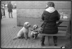 Me, me! (MartPics1968) Tags: leicam42 summicron50mmf2 blackwhite streetphotography motepark dogs cockapoo woman bench 35mmfilmcamera 35mmfilm 35mm rangefinder epsonv550photoscanner kodaktmaxp3200 kodakd76