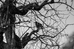 Details of the winter (skp-mm) Tags: 135mm blumenundpflanzen ilce7rm4 nature sony sonyalpha7riv winter a7riv bw sw α7riv fellbach badenwürttemberg deutschland