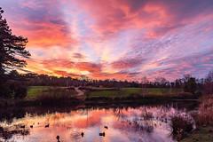 December Sunset - DSC_0160-Edit (John Hickey - fotosbyjohnh) Tags: 2019 cabinteelypark december2019 sunset nikon nikond750 manfrotto nature sky pond lake ducks flickr reflections