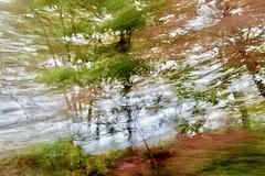 """""""Ombre di bosco fluttuavano accanto silenziose attraverso la pace del mattino."""" (margot 52) Tags: mosso bosco alberi autunno jjoyce"""