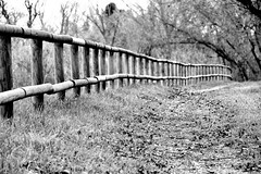 Path (jaume zamorano) Tags: blackandwhite blancoynegro blackwhite blackandwhitephotography blackandwhitephoto bw d5500 dof ground lleida lines monochrome monocromo noiretblanc nikonistas pov path road fence tardor forest