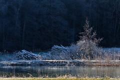 Ice Blue | Frozen (picsessionphotoarts) Tags: nikon landschaft landschaftsfotografie landscapephotography bayern bavaria deutschland germany nikonphotography nikonfotografie landscape nikond850 mittelfranken frankenhöhe winter iceblue frozen frosty afsnikkor80400mmf4556gedvr countryside landleben weiher lake