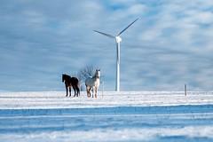 powerful (Andreas.W.) Tags: mühlviertel horsepower windrad