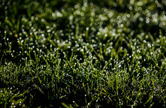 Morning dew (Jose Rahona) Tags: grass hierba agua gotas drops verde green rocio dew morning