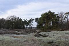 Kampina, 29 december 2019 winterwandeling (3) (peerkescheffers67) Tags: kampina hei heide vennen bos natuurmonumenten