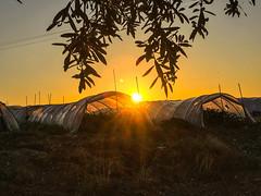 Licata, Sicily - farm stay