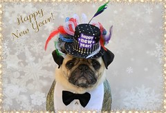 Happy New Year! (DaPuglet) Tags: pug pugs dog dogs pet pets animal animals carlin chien newyear happynewyear party celebration costume hat tophat tuxedo tux bowtie celebrate newyearseve 2020 friendship friends cute fun bonneannée newyear2020 sunrays5 coth5
