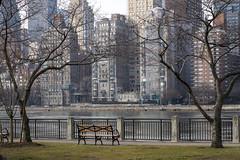 _ARI7118 (abbeyroad-) Tags: nyc eastriver rooseveltisland river bench buildings trees city newyork newyorkcityscape tallbuilding