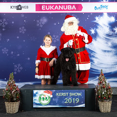 HRV Christmas Dog Show (Bergbos) Tags: bergbos bouvier des flandres dog show result
