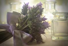 Lavender to Keep (Ronnie Gaye) Tags: lavender boquet bow ribbon glass jars stilllife bottles flora plant pretty soft