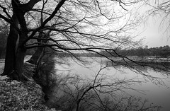 Hibernation (gubanov77) Tags: nature landscape blackwhite bw blackandwhite monochrome kuzminki shibaevskypond moscow russia winter december trees woods water cold hibernation branches