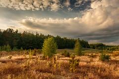 Landscape (bożenabożena) Tags: landscape meadow grass sky clouds sunset trees goldengrass krajobraz łąka las trawy złotetrawy niebo chmury poland