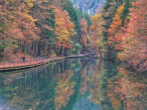 Goodbye Autumn Reflection