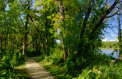 Kiche Manitou Lake, Manitoba (Allison Kendall) Tags: manitoba canada forest lake camping hiking outdoors activity travel nature hike path woods trees park summer green lush afternoon warm sunlight