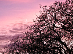 Moon at sunset (MELLIE_MAN) Tags: sunset moon crescentmoon tree silhouette