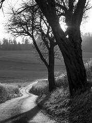 Last light of the Day (memories-in-motion) Tags: black white olympus em5markiii canon 50mm f12 mono gegenlicht way bavaria home line path walk mft december 2019 iso400 trees lightflow